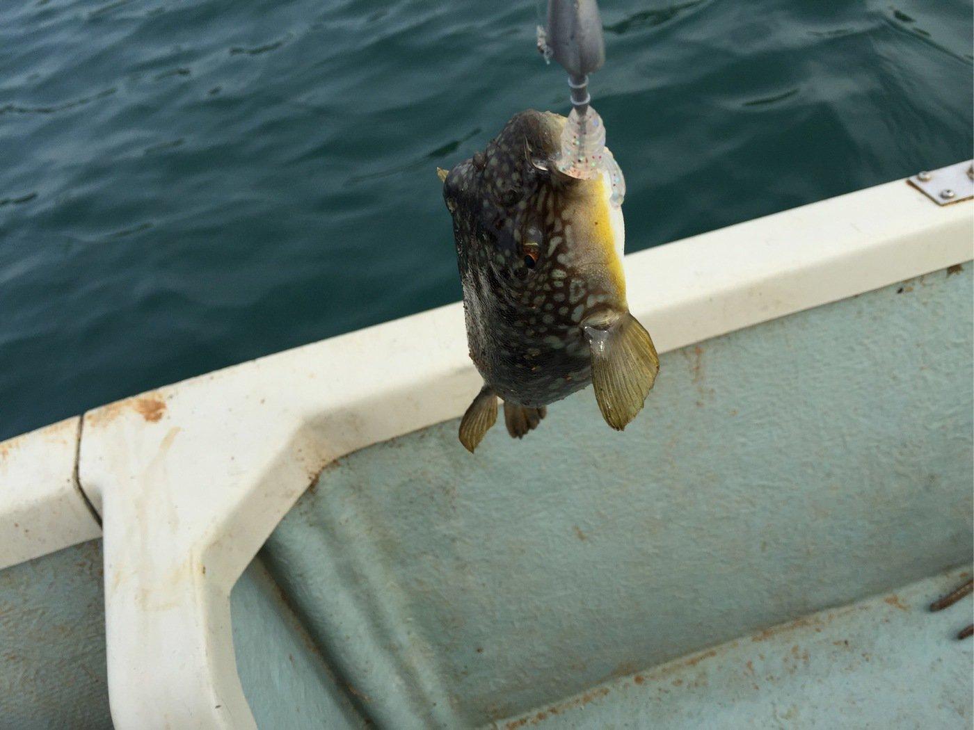 ヨシダさんの投稿画像,写っている魚はフグ