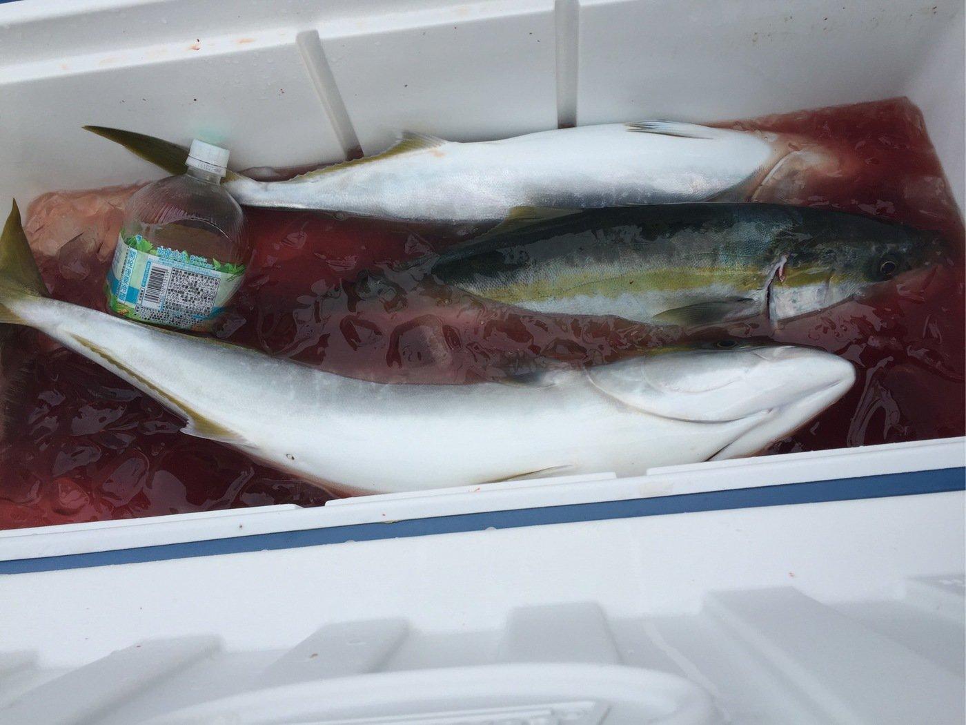 かおりさんの投稿画像,写っている魚はブリ