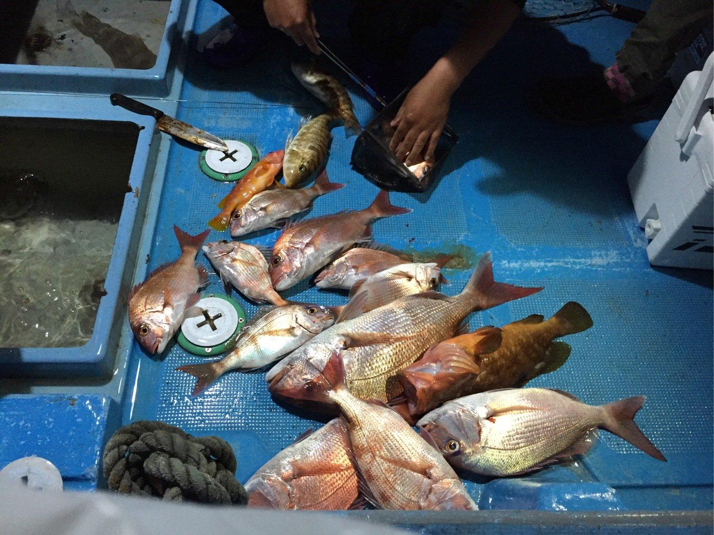 イカ天国さんの投稿画像,写っている魚はマダイ