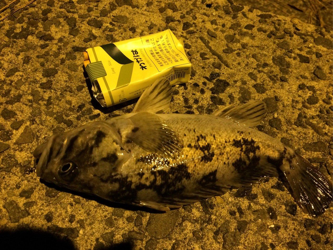 あぐりこさんの投稿画像,写っている魚はメバル