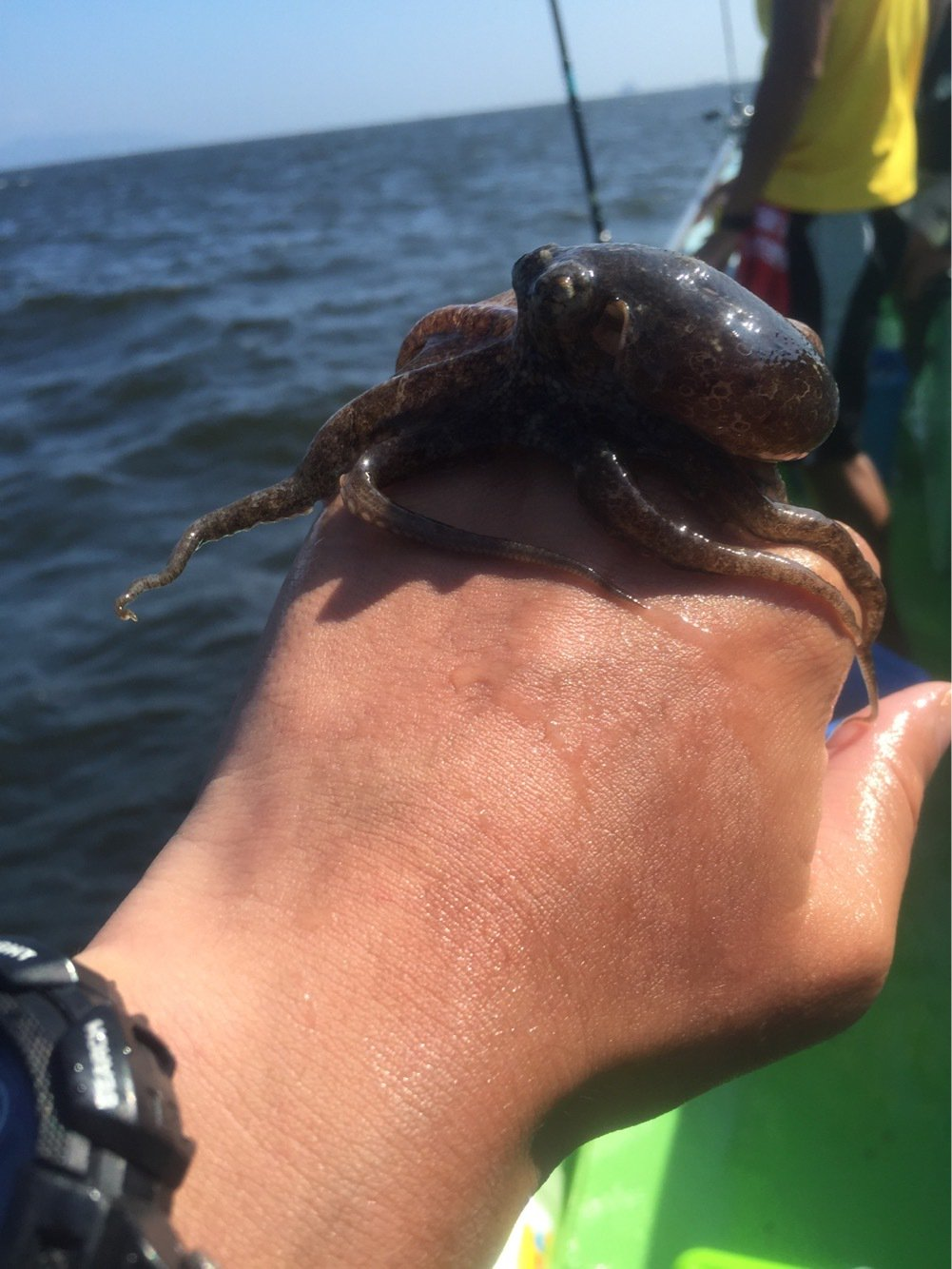 KJさんの投稿画像,写っている魚はミズダコ