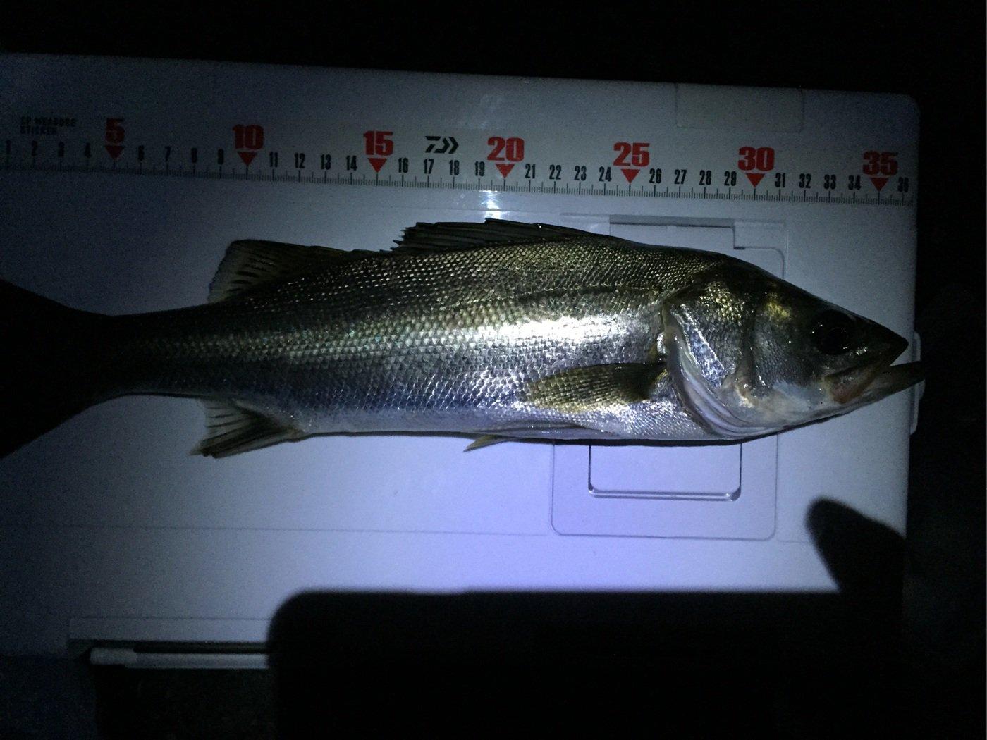 taktakさんの投稿画像,写っている魚はスズキ