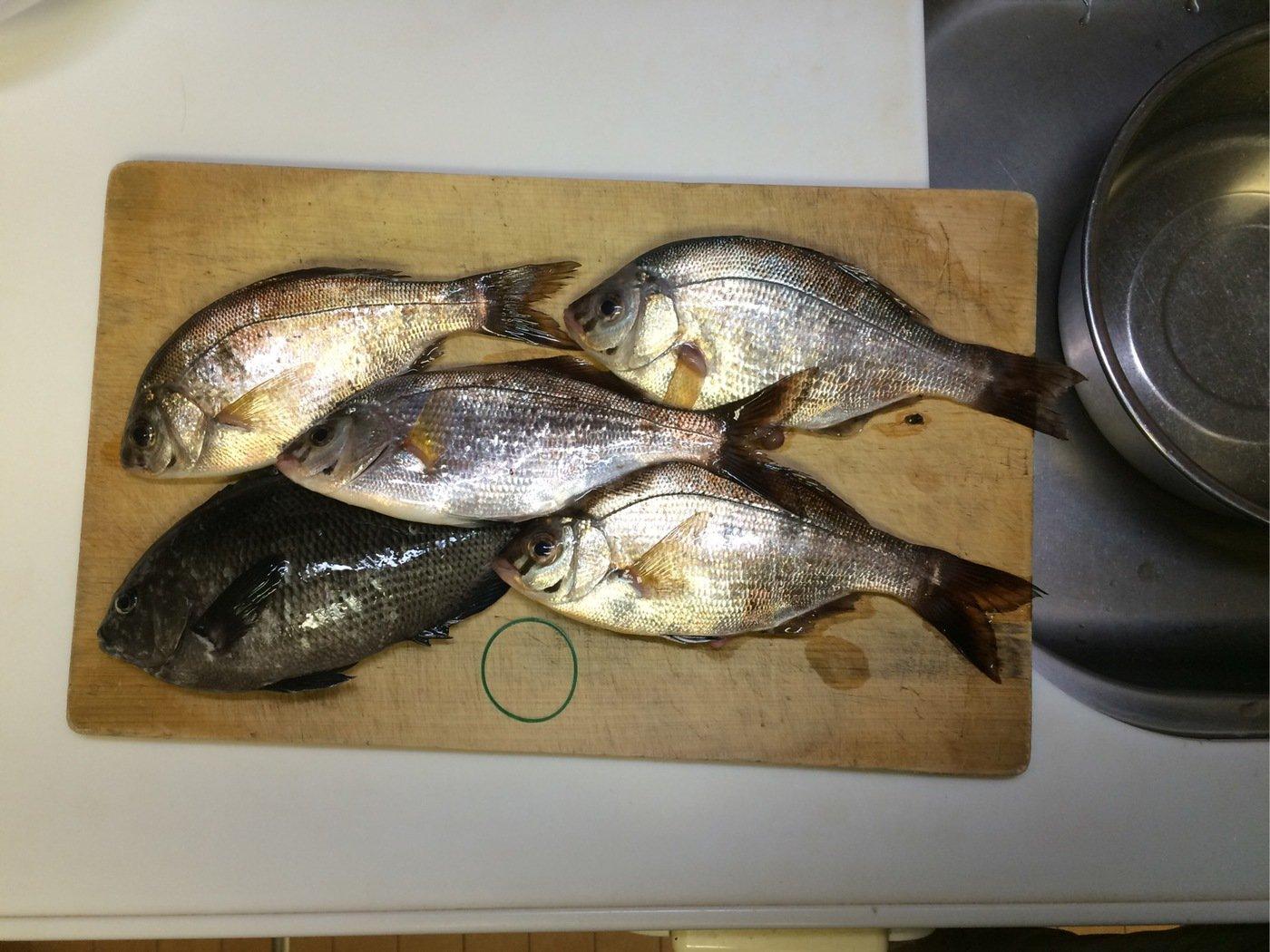 SKY-HIさんの投稿画像,写っている魚はメジナ