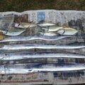 釣りかわさんの奈良県生駒郡での釣果写真