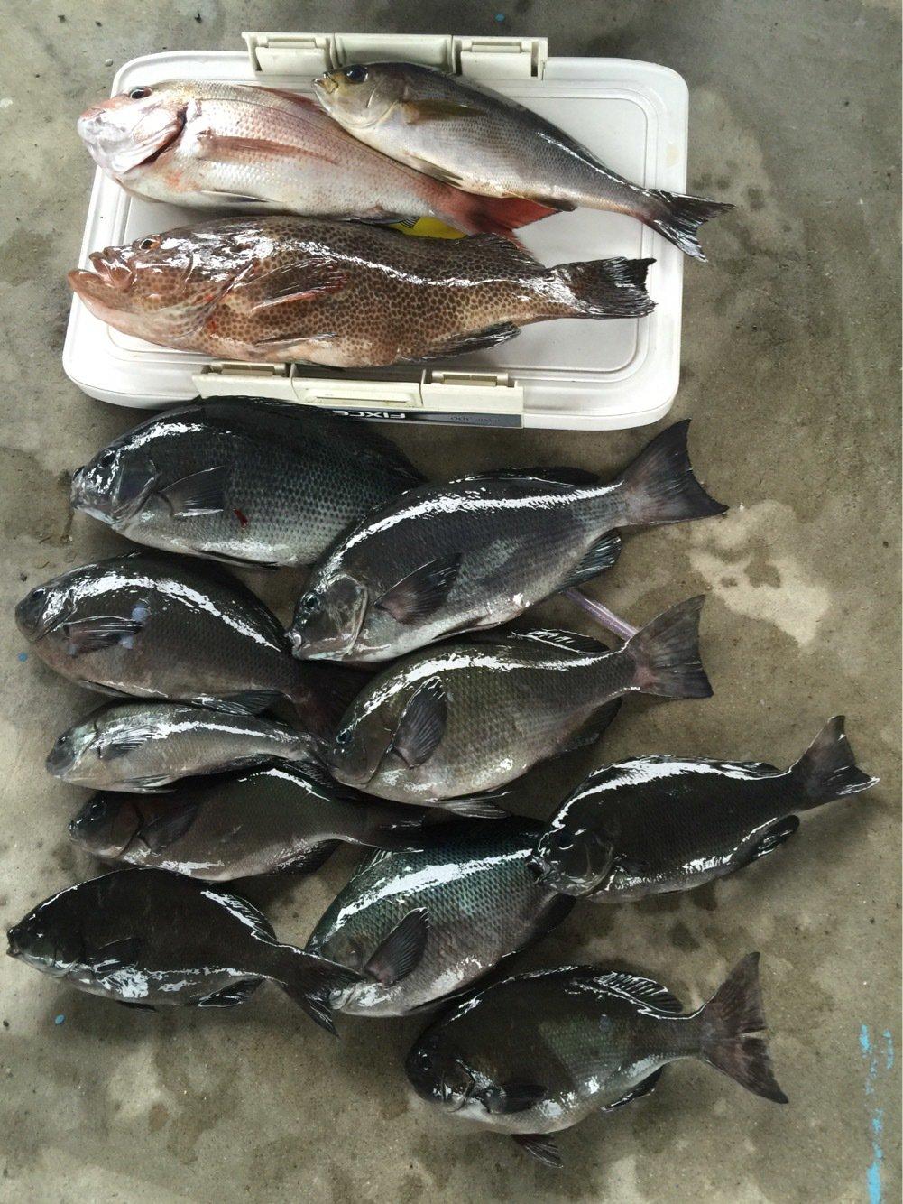 浦島太郎さんの投稿画像,写っている魚はマダイ