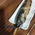 masa さんの新潟県妙高市でのマサバの釣果写真
