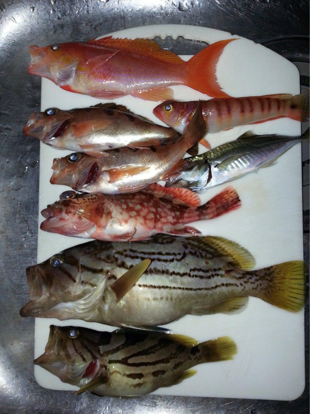 MINATOさんの投稿画像,写っている魚は