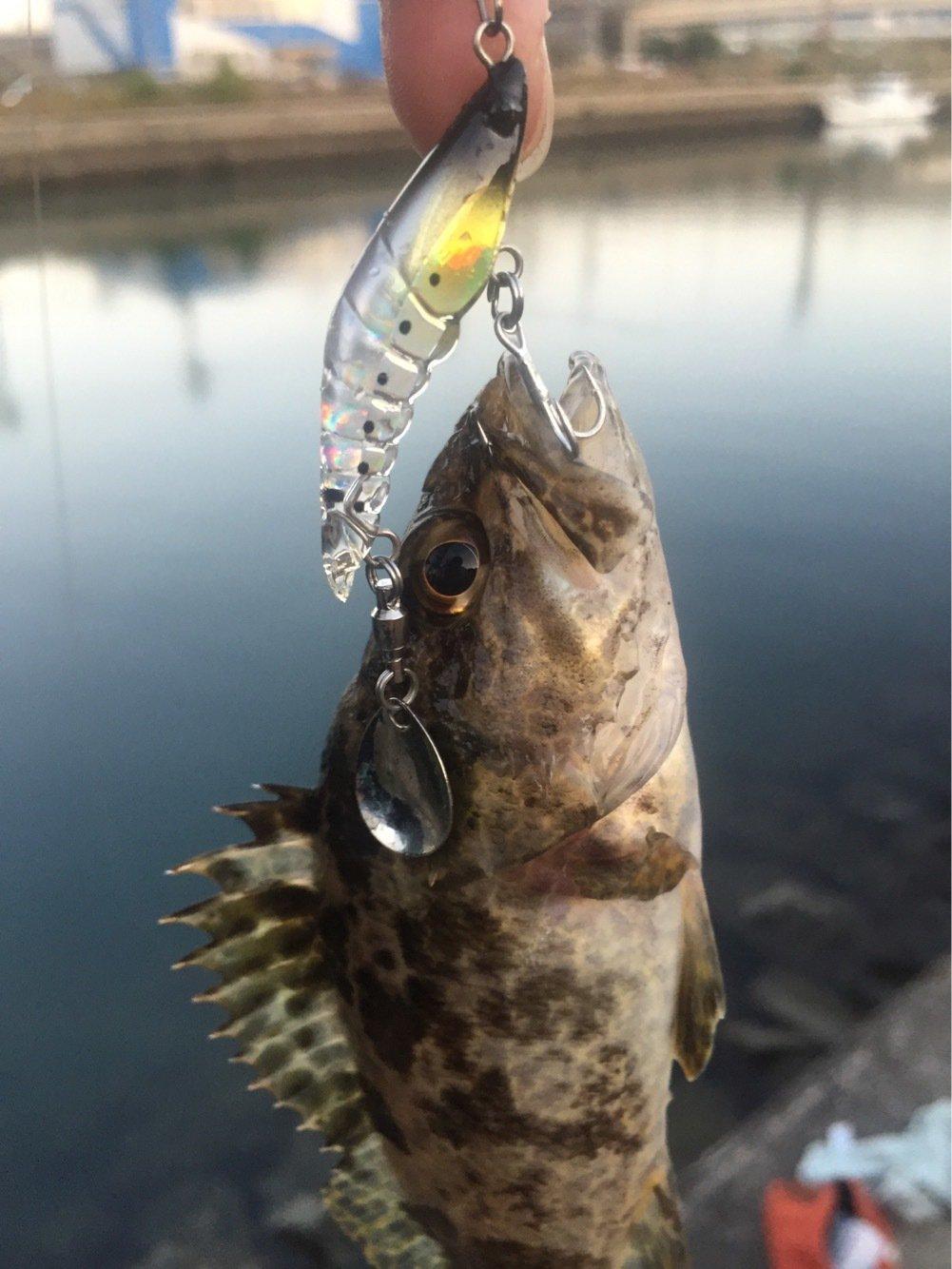 花京院典明さんの投稿画像,写っている魚はタケノコメバル