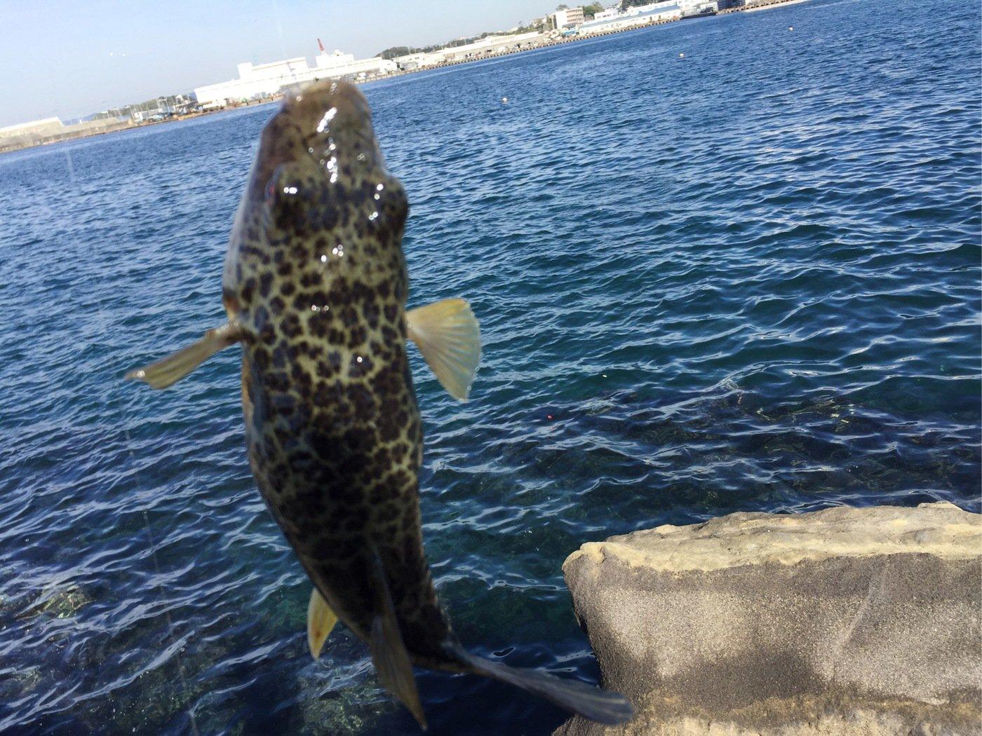 釣り女子さんの投稿画像,写っている魚はフグ