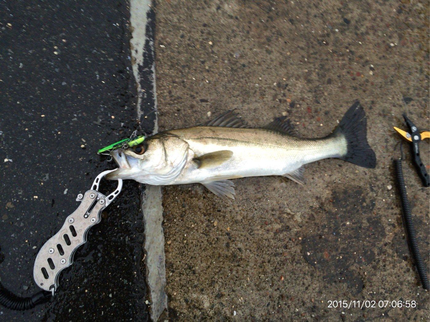 takahisa_wataさんの投稿画像,写っている魚はスズキ