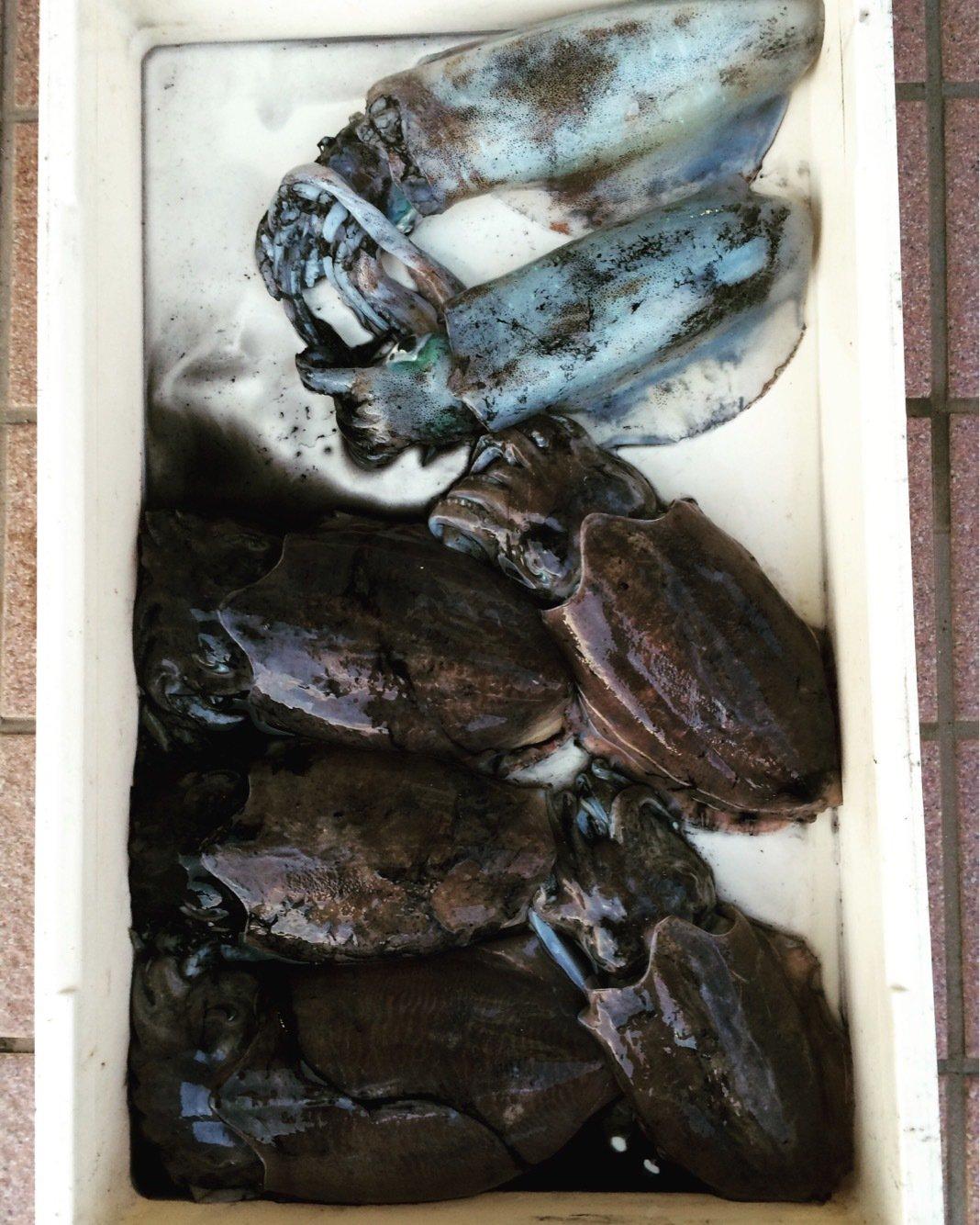 のりみつさんの投稿画像,写っている魚はアオリイカ