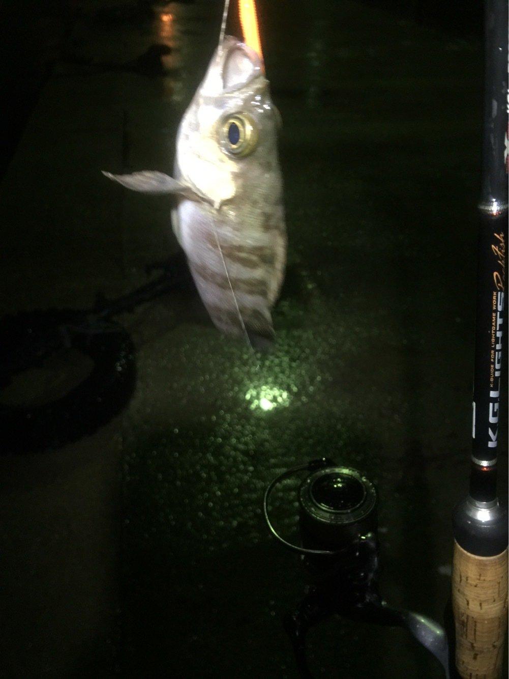 タンクトッパーさんの投稿画像,写っている魚はクロメバル