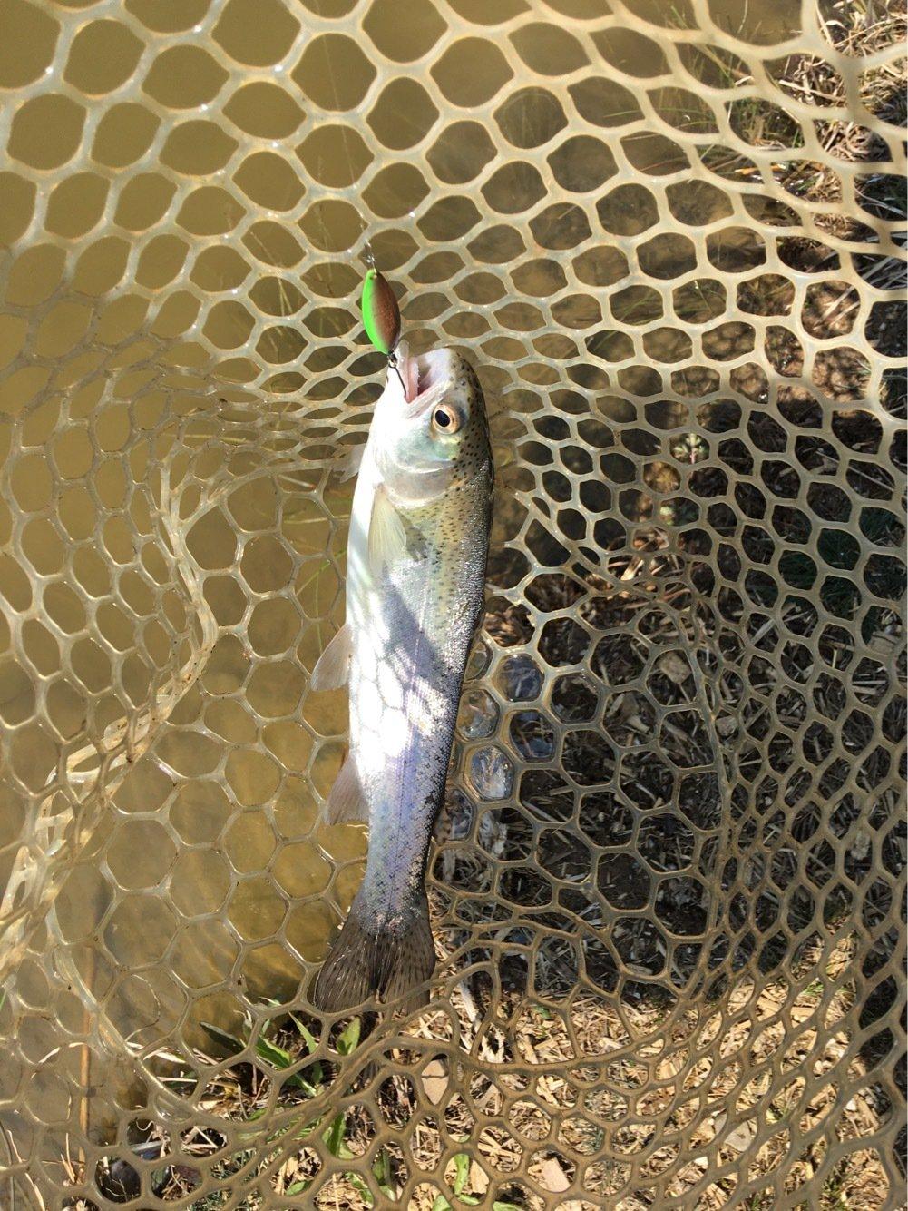 ドゥーキーさんの投稿画像,写っている魚はニジマス
