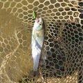 ドゥーキーさんの栃木県栃木市での釣果写真