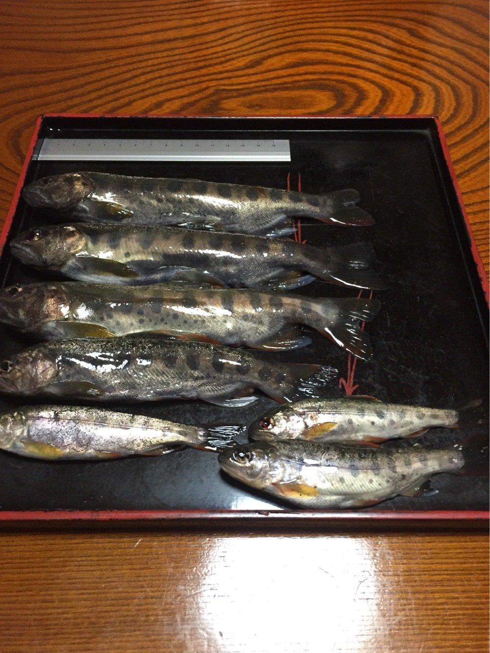 コロスケさんの投稿画像,写っている魚はヤマメ