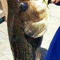 クボさんだぞ!さんの山形県東根市での釣果写真