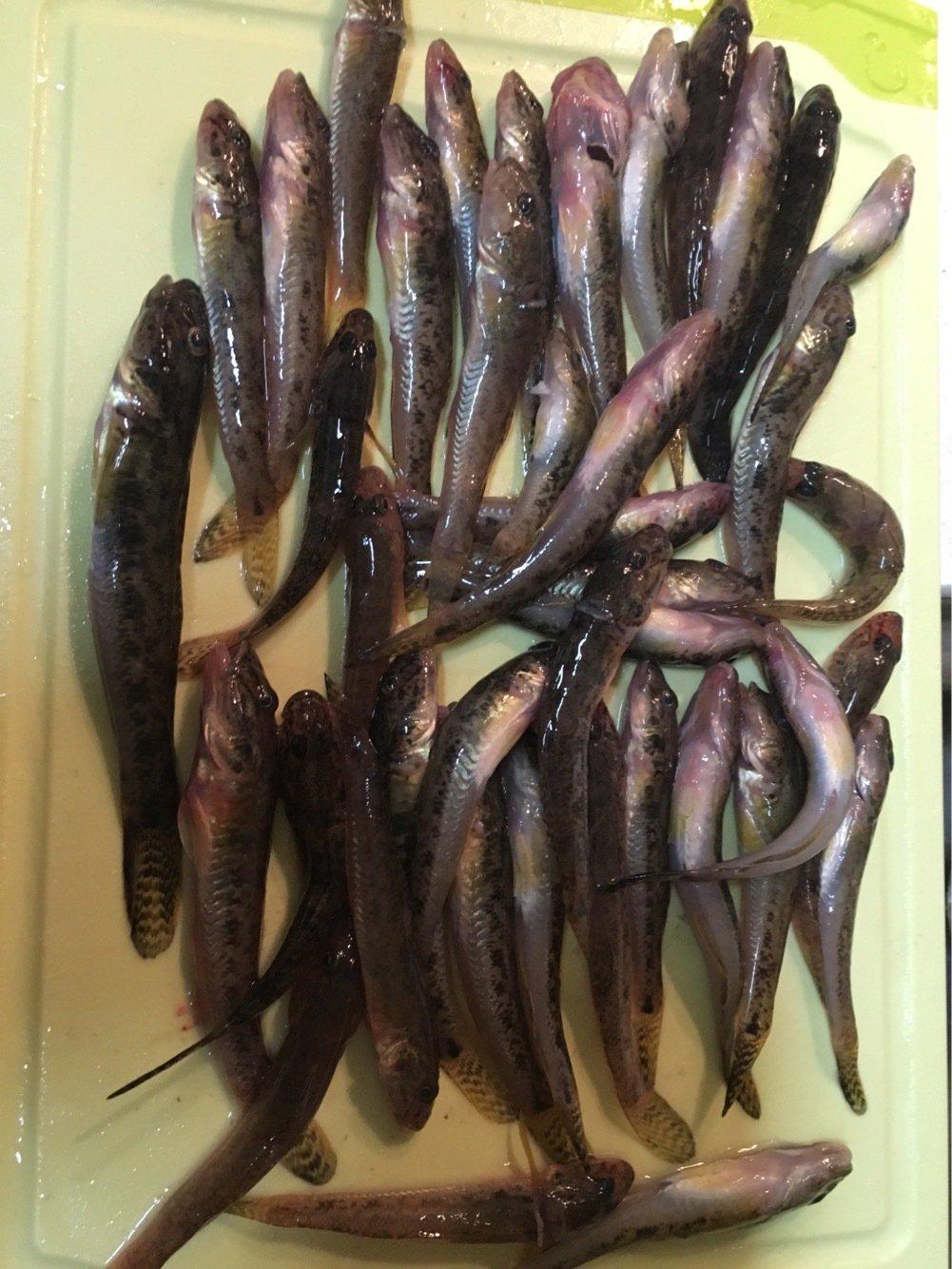 竜一さんの投稿画像,写っている魚はマハゼ
