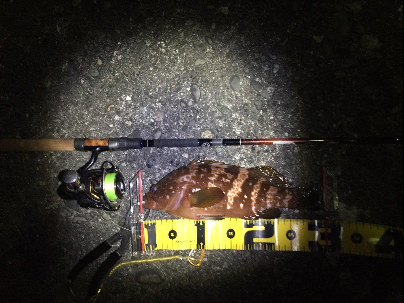 SIAさんの投稿画像,写っている魚は
