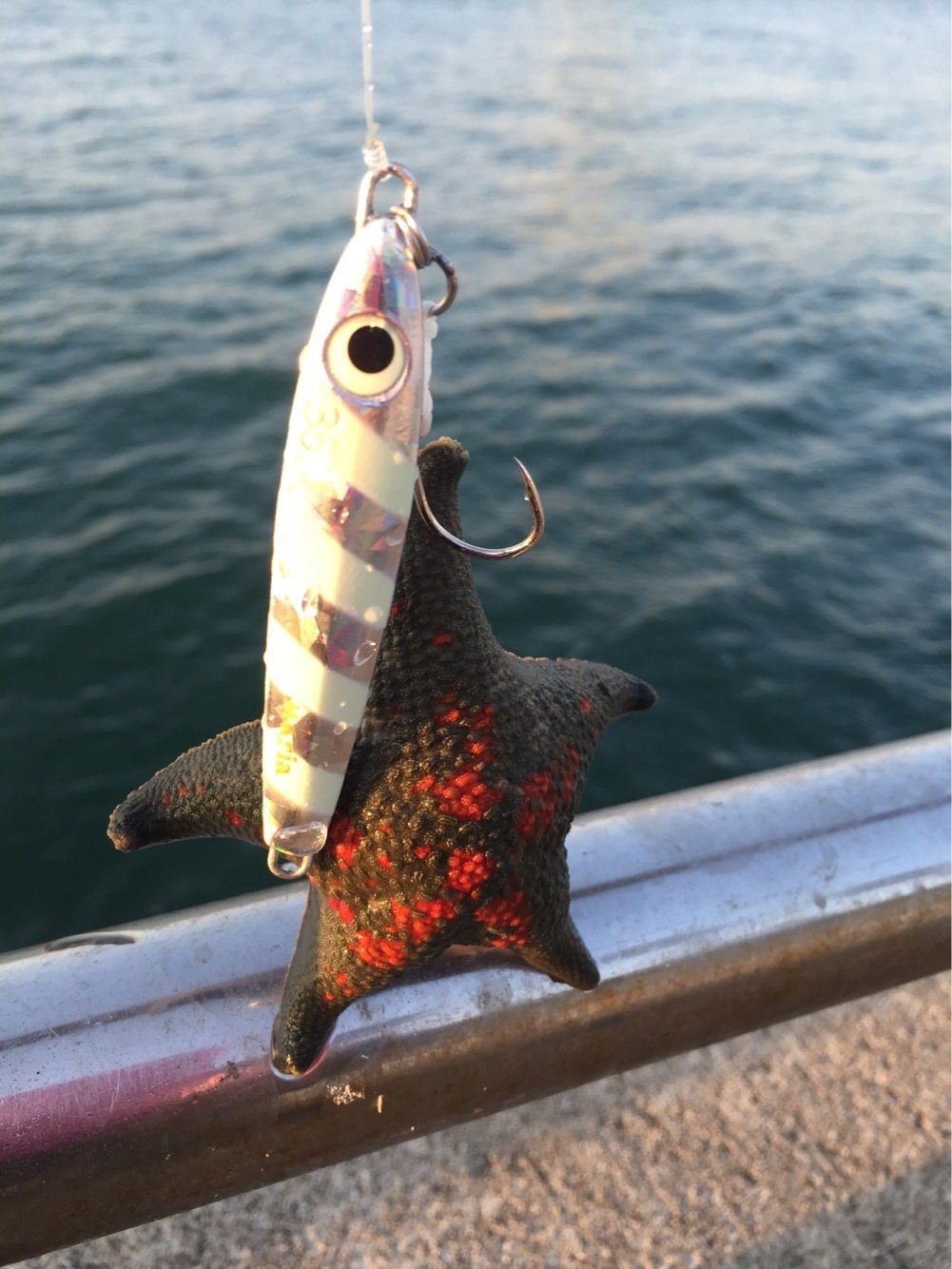 ヨッシーさんの投稿画像,写っている魚は