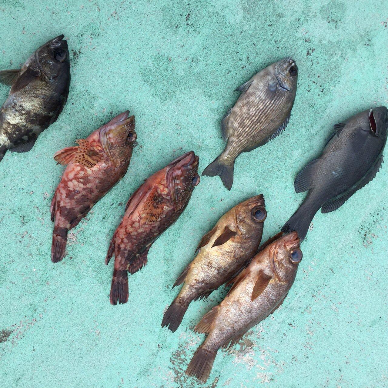 逸輝さんの投稿画像,写っている魚はカワハギ