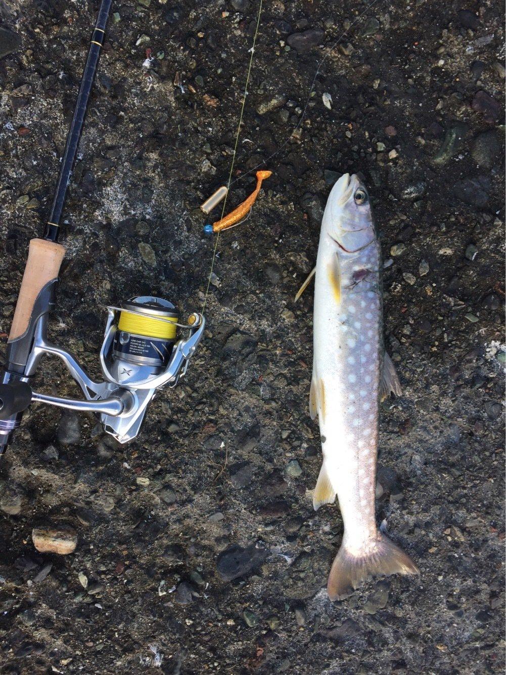 コダソンさんの投稿画像,写っている魚はアメマス