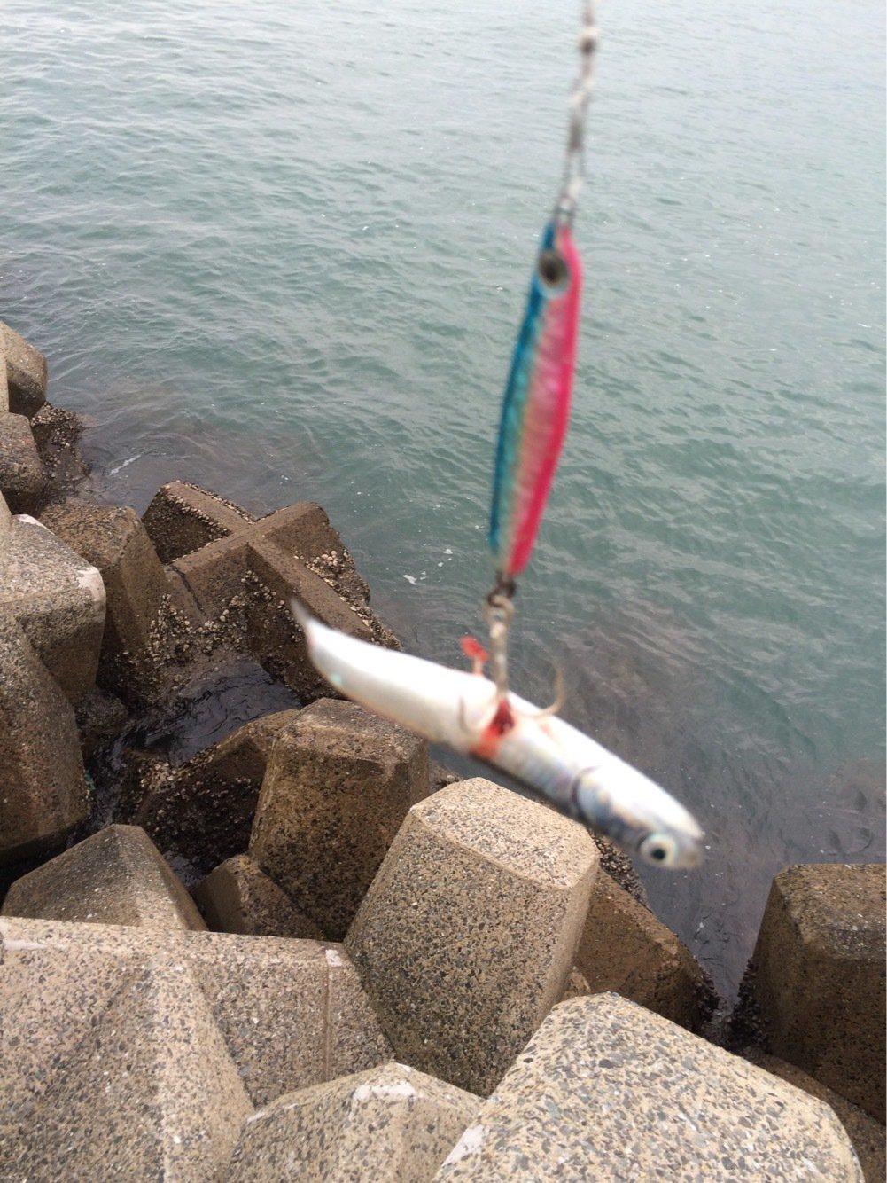 ひろさんの投稿画像,写っている魚はウルメイワシ