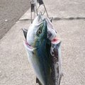 浩行さんの新潟県刈羽郡での釣果写真