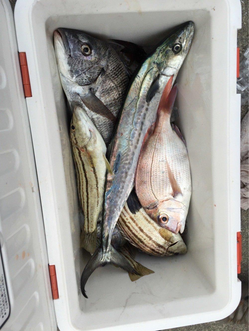 タカハシ シュウヘイさんの投稿画像,写っている魚は