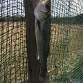 キットンさんの千葉県匝瑳市でのスズキの釣果写真