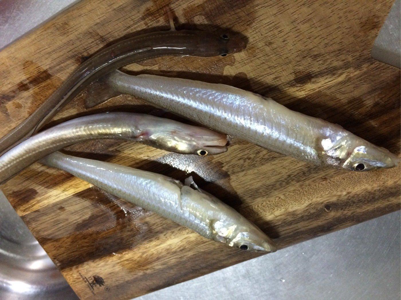 パンプキンさんの投稿画像,写っている魚はシロギス
