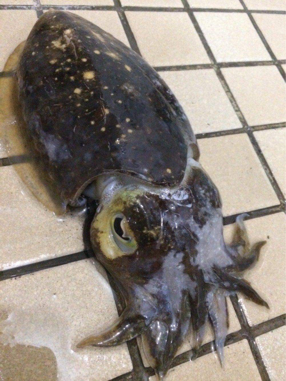 kenさんの投稿画像,写っている魚はコウイカ