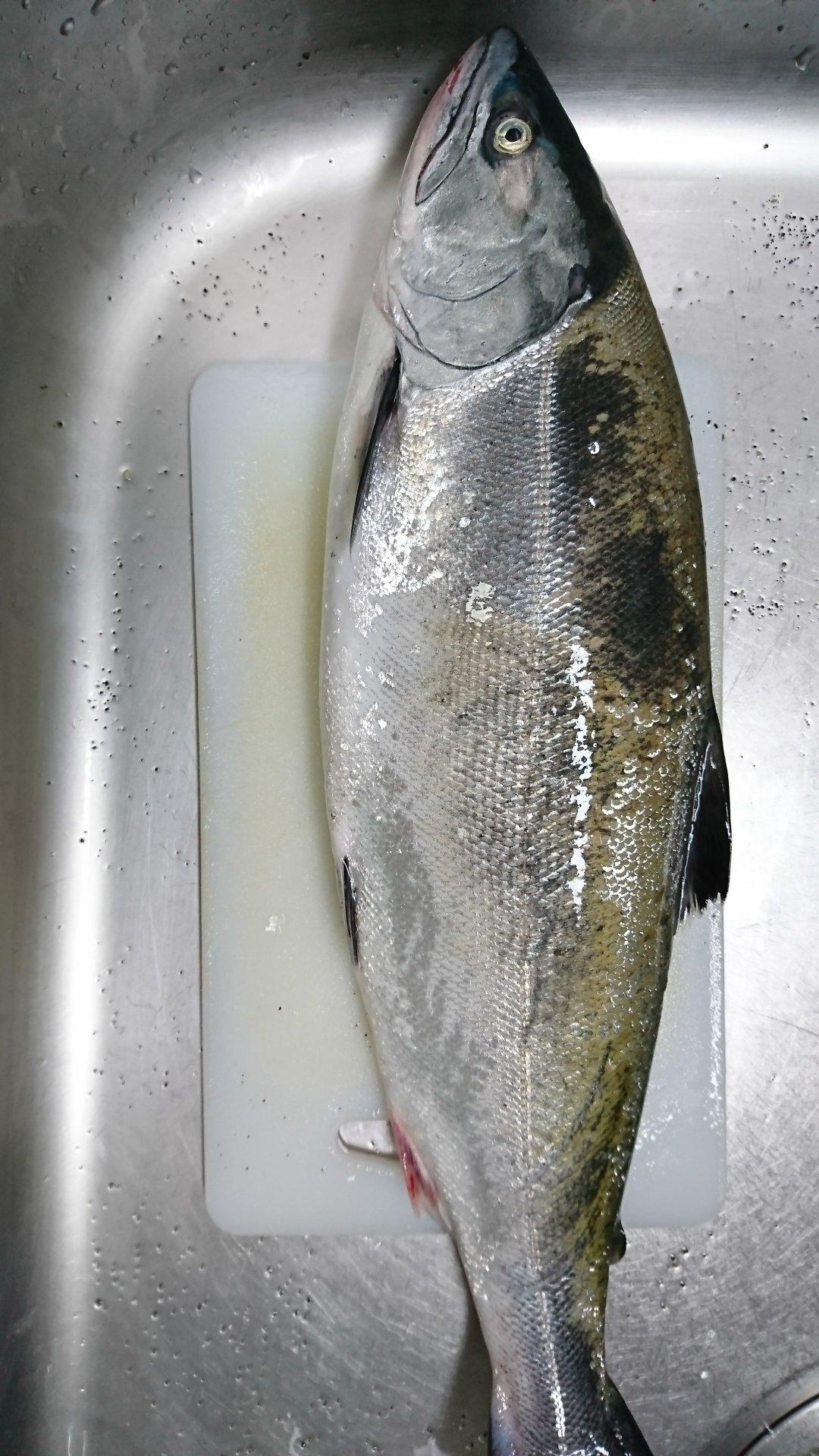 謎の美食家さんの投稿画像,写っている魚はサクラマス
