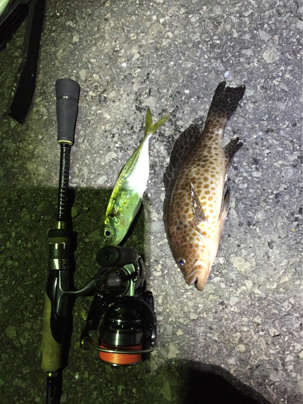 よしブーさんの投稿画像,写っている魚はオオモンハタ