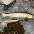 RODMAN'Sさんの北海道河東郡での釣果写真