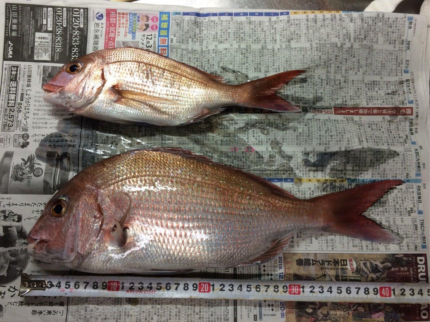 どーちんさんの投稿画像,写っている魚はマダイ