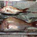 どーちんさんの長崎県西海市でのマダイの釣果写真