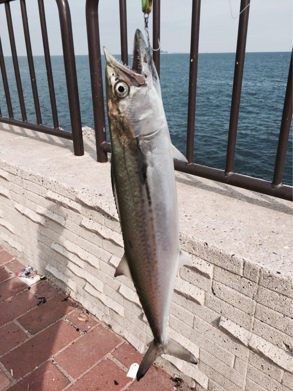 コペンハーゲンさんの投稿画像,写っている魚はサワラ