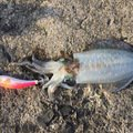 博さんの鹿児島県曽於市での釣果写真