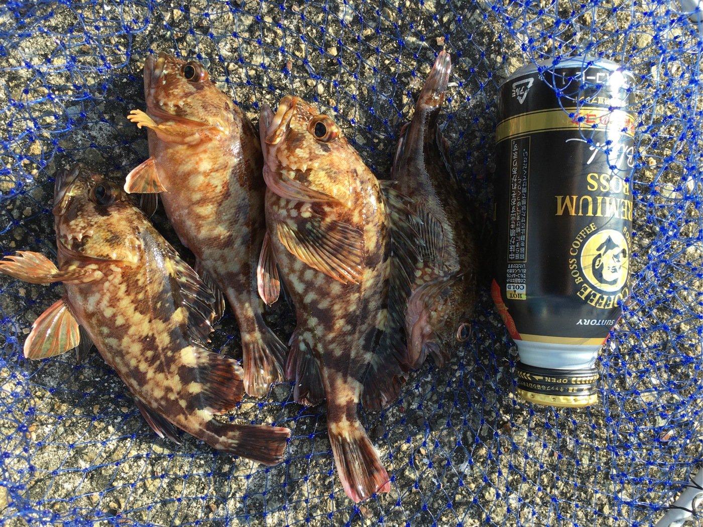 へっぽこズボ釣り師さんの投稿画像,写っている魚はカサゴ