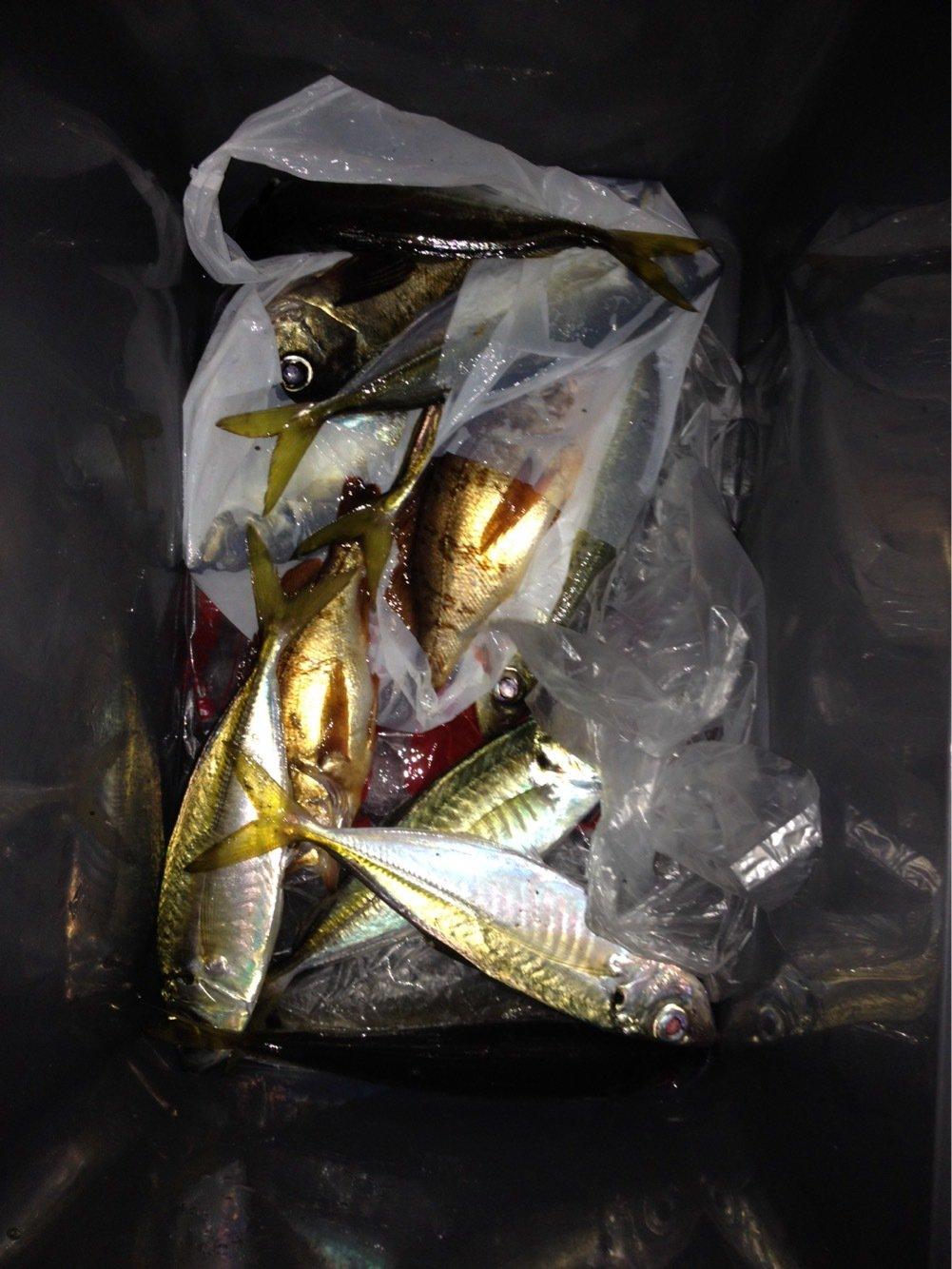 雪風さんの投稿画像,写っている魚はアジ