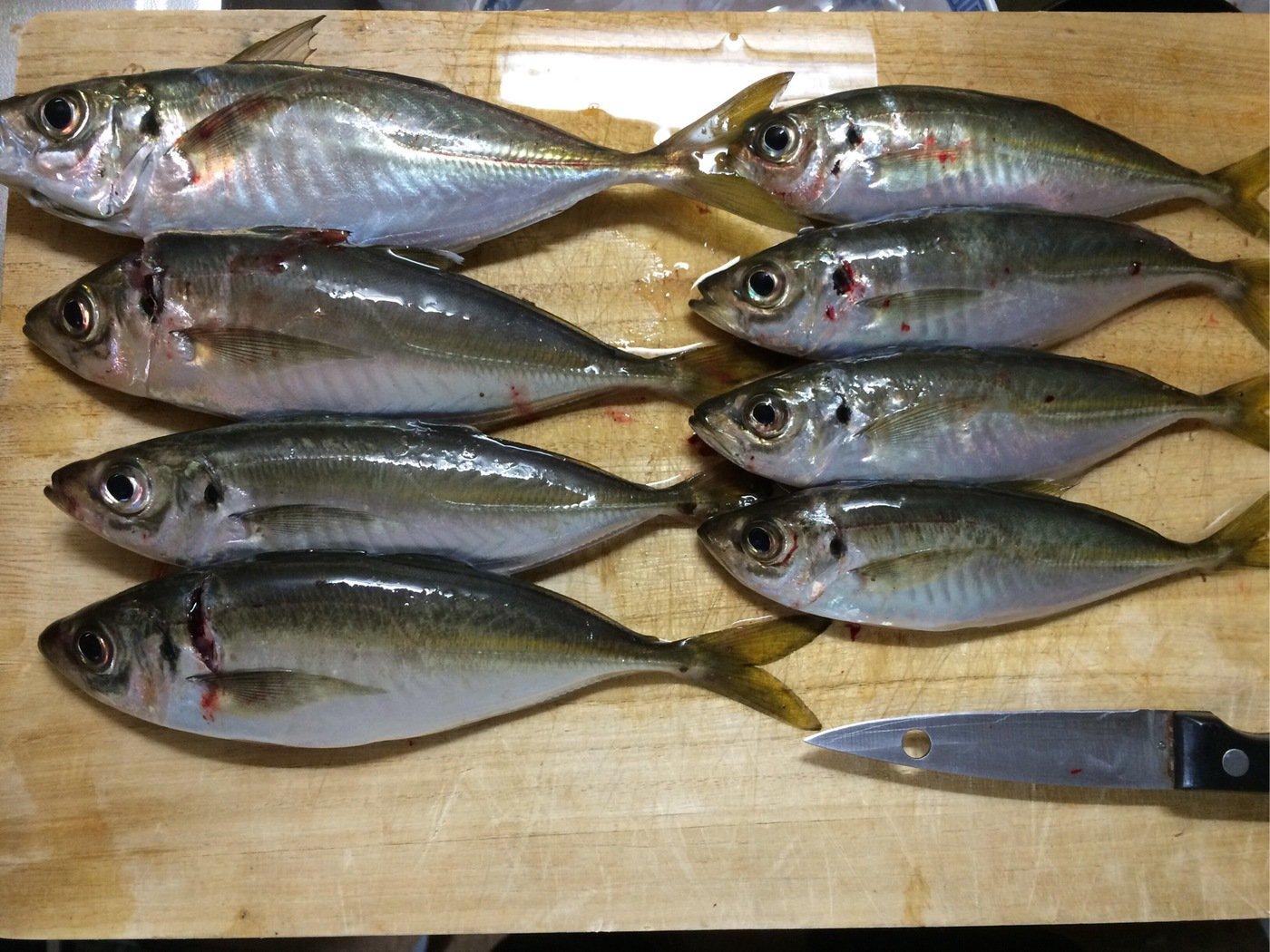 エンドウさんの投稿画像,写っている魚はアジ