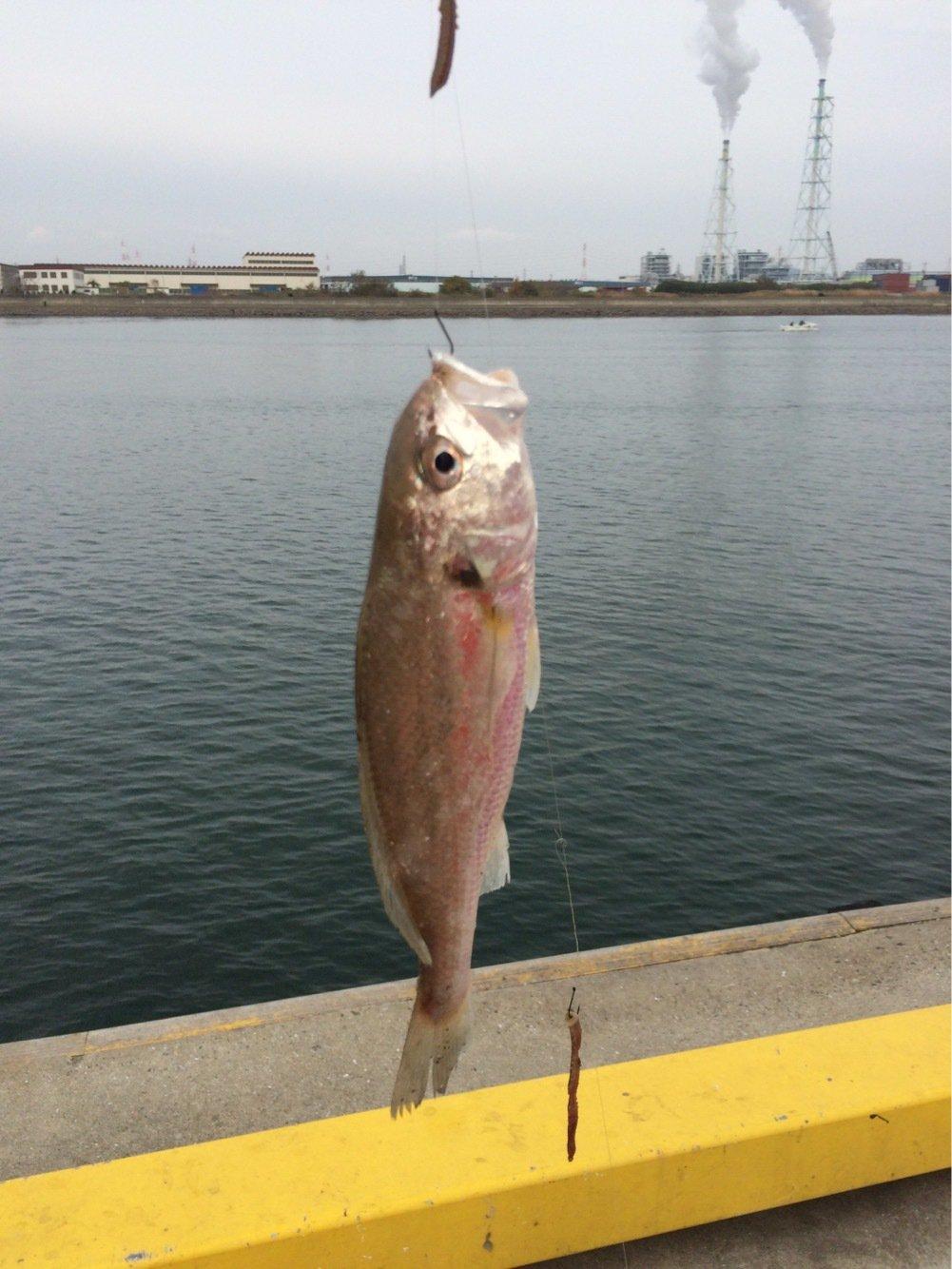 ゆかさんの投稿画像,写っている魚は