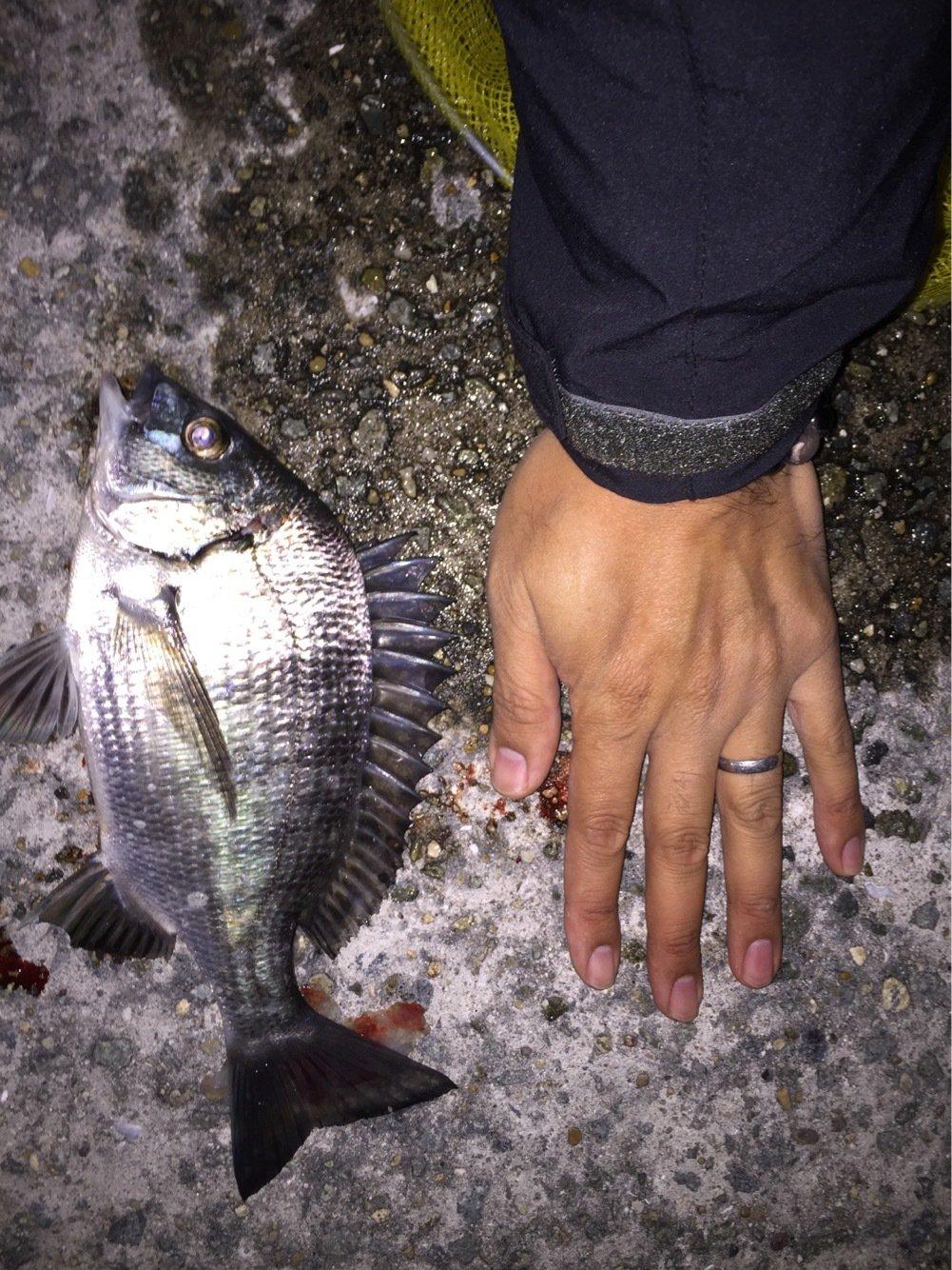 信さんの投稿画像,写っている魚はクロダイ