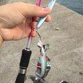 AritAさんの福岡県糸島市でのカタクチイワシの釣果写真