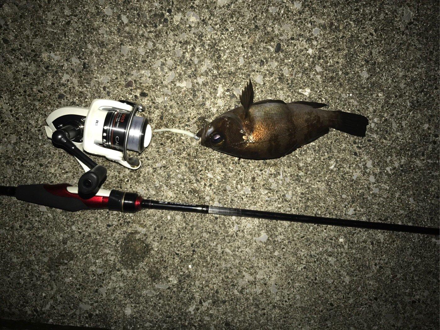 わっさんさんの投稿画像,写っている魚はシロメバル