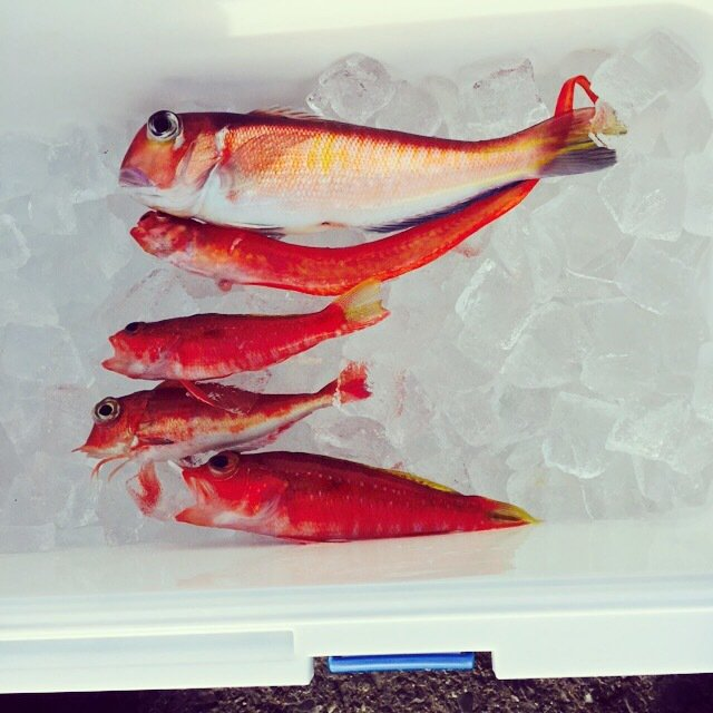 肉メンさんの投稿画像,写っている魚はアマダイ