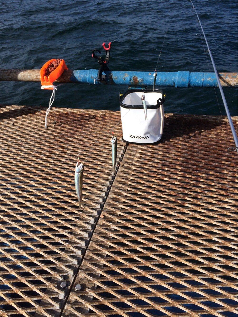いっくんさんの投稿画像,写っている魚はカタクチイワシ