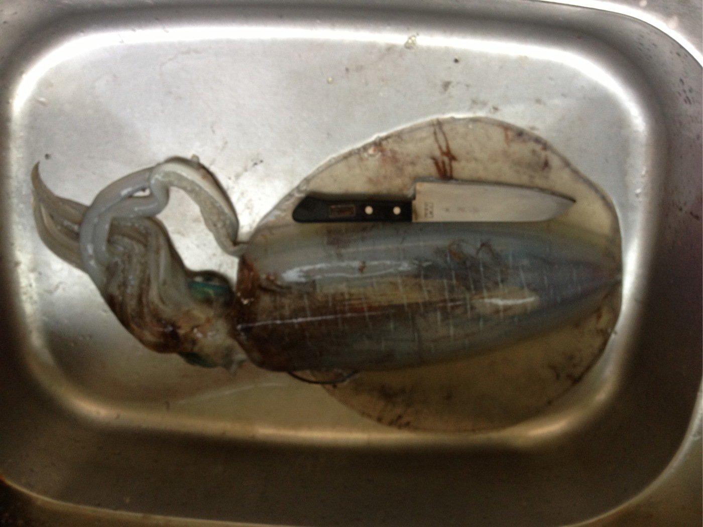 佐田幸男さんの投稿画像,写っている魚はアオリイカ