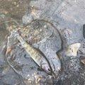 そりみささんの群馬県甘楽郡での釣果写真