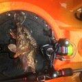 team esoさんの長崎県松浦市でのカサゴの釣果写真